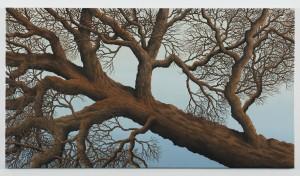 Falling Tree 1,