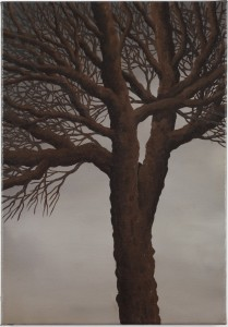 Tree 12,